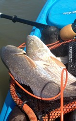 big redfish, buggs fishing