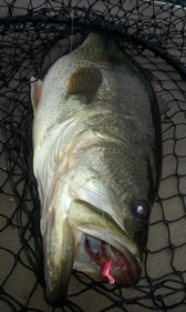 Buggs Largemouth, Buggs Bass Jig