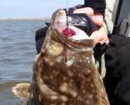 barkley peschel, flounder